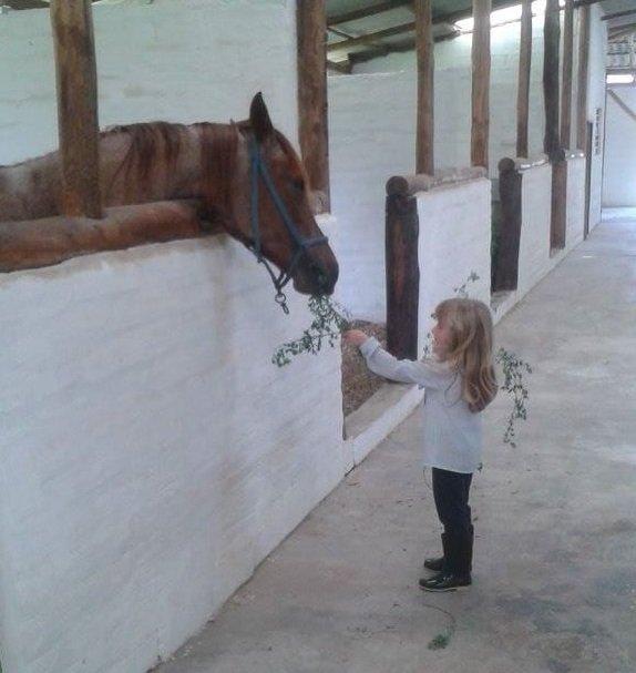 caballos-quito