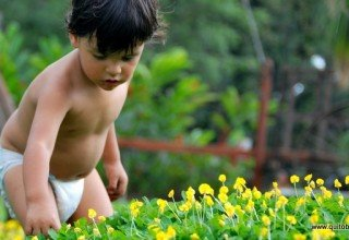 Little boy in a field of flowers