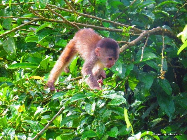 mono-selva